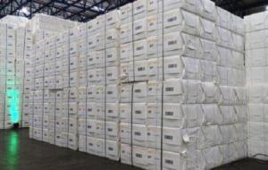 Maior exportador de celulose do país, MS vê setor florestal impulsionar economia verde no Estado