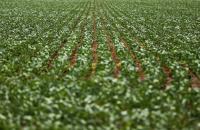 Brasil amplia diplomacia agrícola e fortalece atuação no exterior