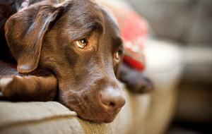 Maus-tratos aos animais é classificado como crime ambiental
