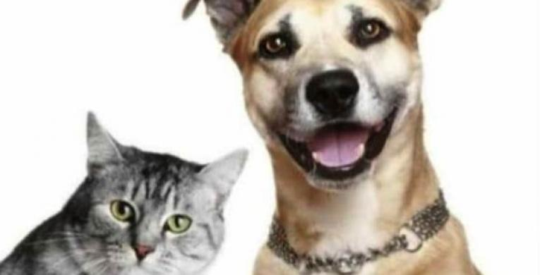 Inscrições aberta para castração gratuita de cães e gatos no Município de Dois Irmãos do Buriti, através da Secretária Municipal de Saúde