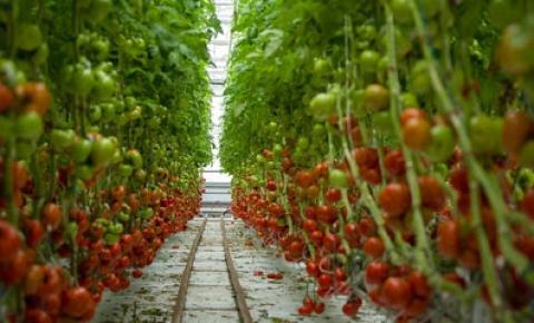 Agricultura urbana orgânica: é uma boa ideia?