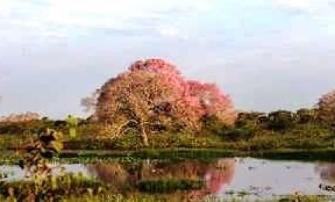 Queimadas no Pantanal não alcançam regiões de pousadas e hotéis fazenda de MS