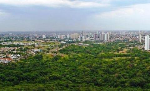 Governo apoia evento internacional sobre arborização urbana que será realizado em 2021