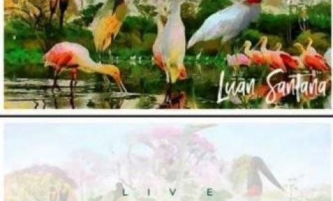 Sul-mato-grossense, Luan Santana fará live no Pantanal para denunciar queimadas