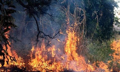 Incêndios no Pantanal já devastaram 20% do bioma
