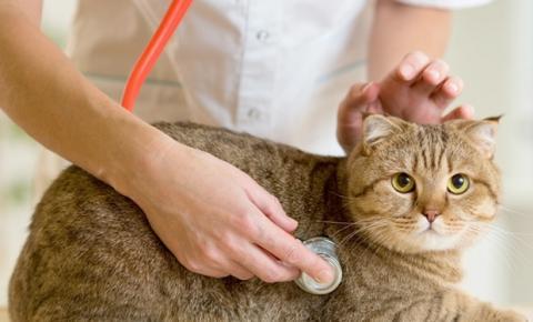 Outubro rosa: câncer de mama também acomete animais de estimação