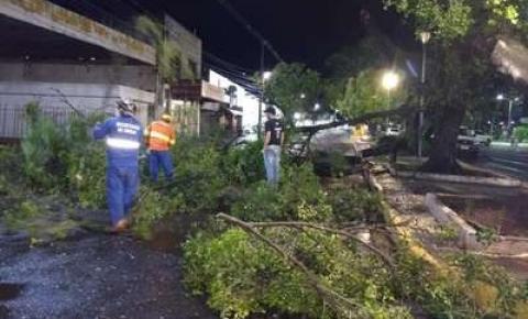 Ventos de 70 Km/h derrubam árvores, fiações e interditam ruas em Aquidauana e região