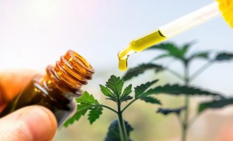 Nos últimos 6 anos, pedidos de importação de medicamentos à base de cannabis sativa cresceram 1.766%