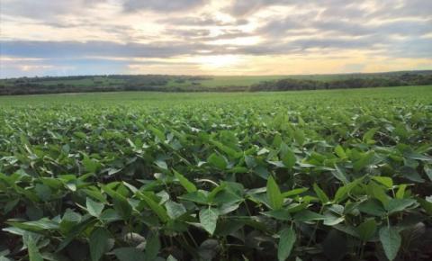 Região Sul-Fronteira de MS é destaque no manejo biológico da soja