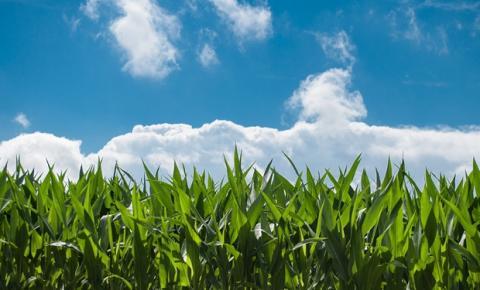 Segundo dados, setor agro demonstrou crescimento mesmo durante a pandemia