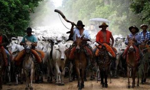 Em agosto, Mato Grosso do Sul vai ter o primeiro Encontro de Comitivas Pantaneiras