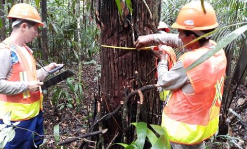 Produção sustentável, comunitária e familiar de produtos da floresta amazônica é tema de seminário virtual