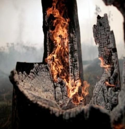 Coalizão entre agronegócio e ONGs propõe ao governo ações contra desmatamento